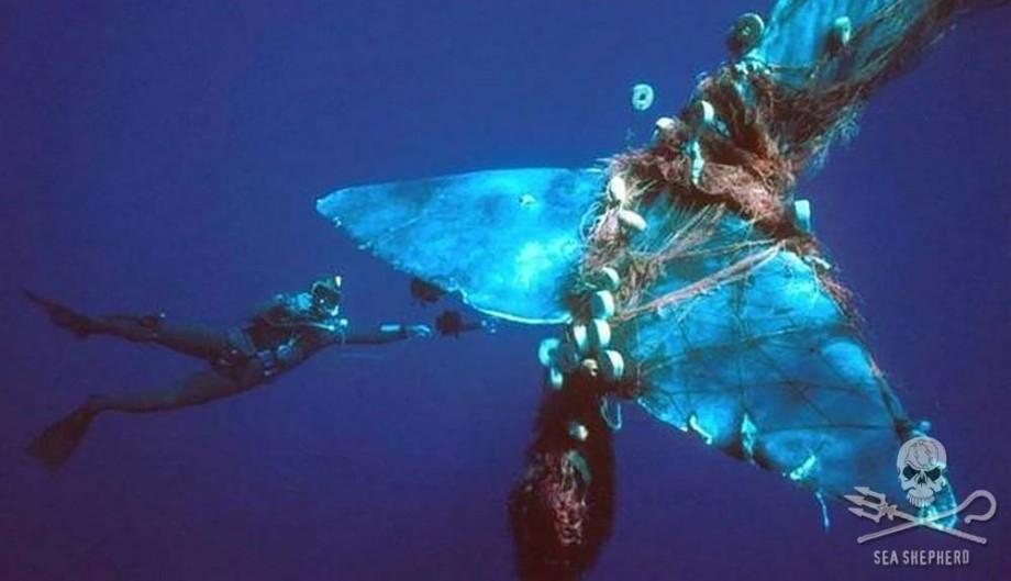 baleine-prise-filet